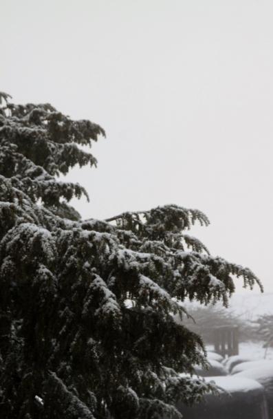 el tejo nevado
